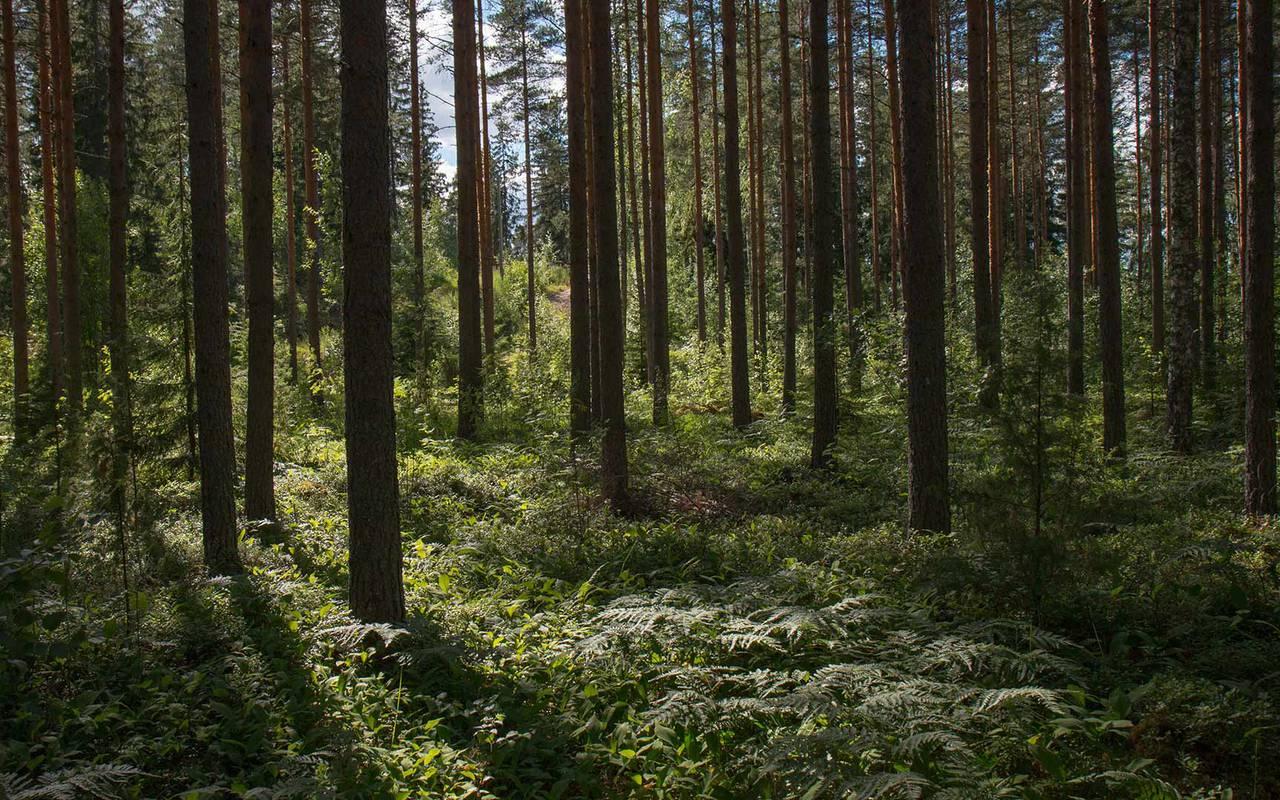Forêt vacances moselle